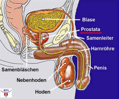 Kirchschlag ONLINE: Prostata